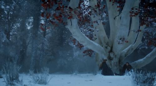 bran-heart_tree